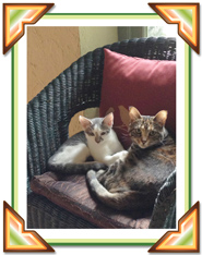 Tamar's cats-second
